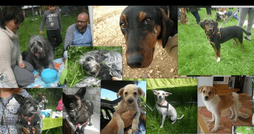 Ζωοφιλική ένωση Ηλιούπολης 200 αδέσποτοι σκύλοι και γάτες κάθε χρόνο βρίσκουν τη θαλπωρή και την ελπίδα χάρη στη ΖΕΗ | YouBeHero
