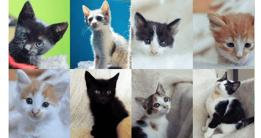 Ζωοφιλική ένωση Ηλιούπολης έχει στόχο να βοηθήσει πολλούς σκύλους και γάτες στο Δήμο Ηλιούπολης ώστε να βρουν τη φροντίδα, την προσοχή και την αγάπη από τους ανθρώπους  | YouBeHero