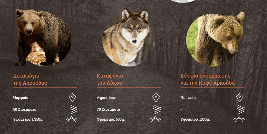 Καταφύγιο αρκούδας καταφύγιο λύκου κέντρο ενημέρωσης για την καφέ αρκούδα arktouros | Youbehero